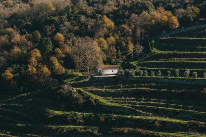Douro vineyards