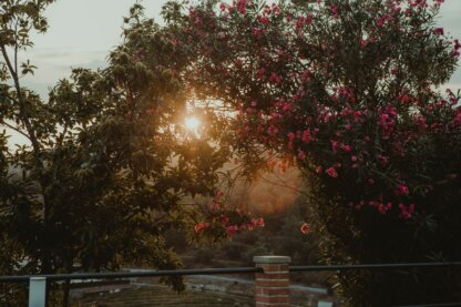 Sunset at Quinta de Santa Teresa
