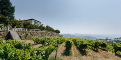 Quinta de Santa Teresa vineyards