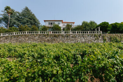 Mansion view from the vineyards