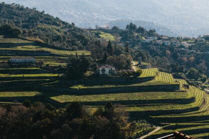 AD Wines Quinta de Santa Teresa